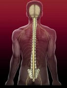 Dr. Hellman trials new implant for spinal surgery of the neck